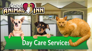 Central Animal Inn